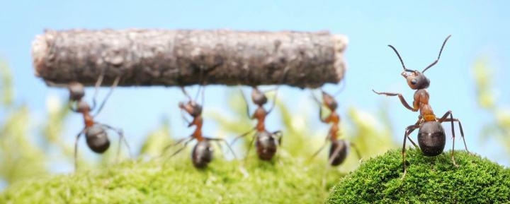 Monday Funday – Dino-Ants