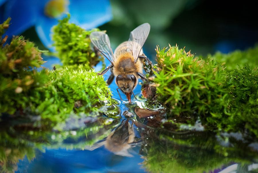 Make a bee bath